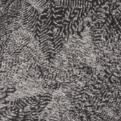 black-fossilized