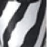 zebra MN17