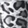 leopard MN14